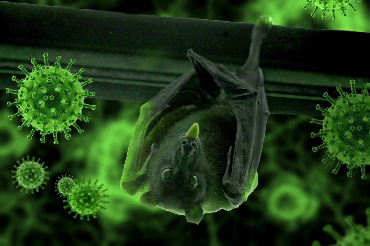 Photo of Pneumonia epidemic: Thai scientists try to find answers from bats