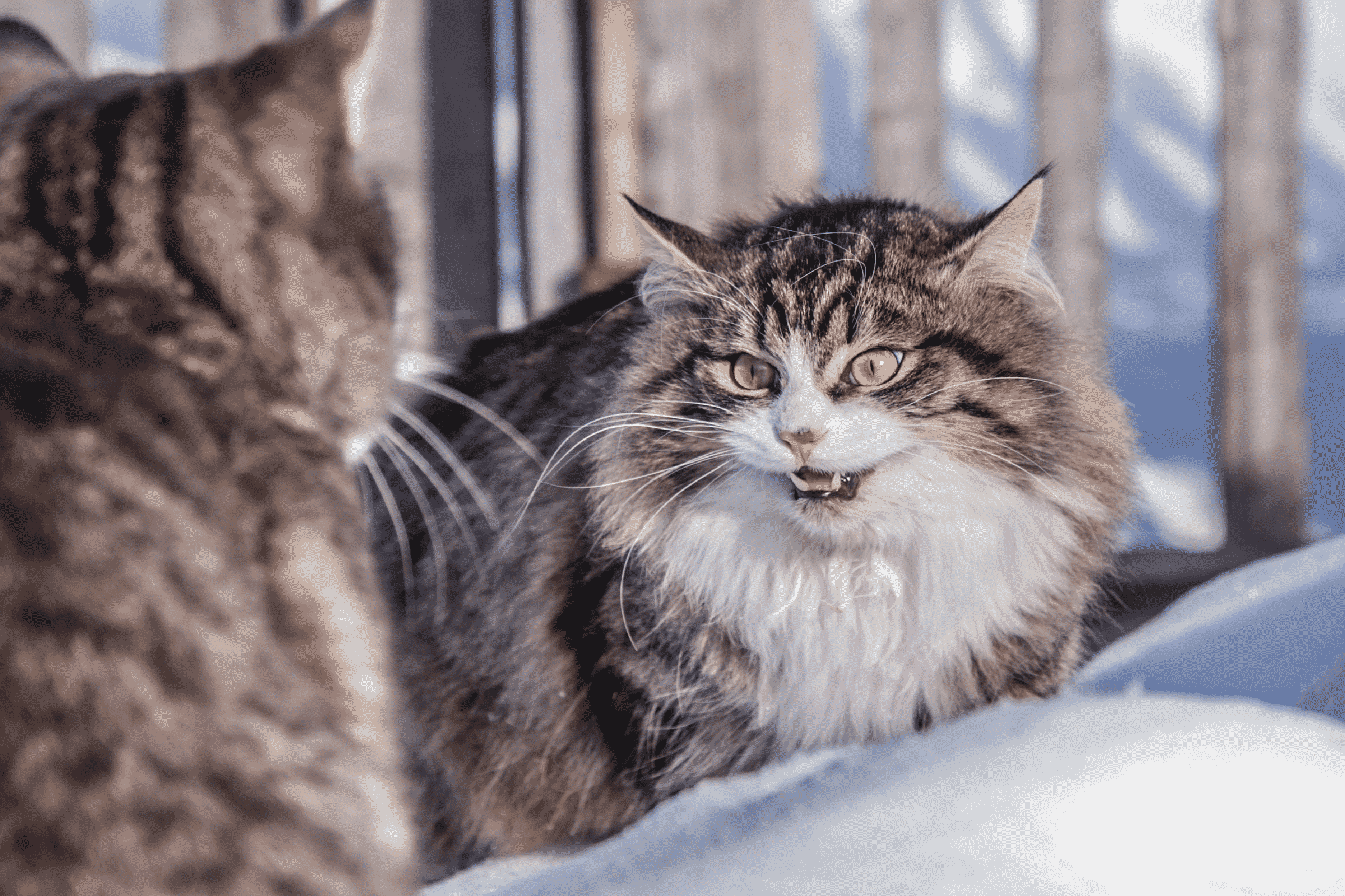 Photo of Dealing With Territorial Issues And Your Automatic Litter Box